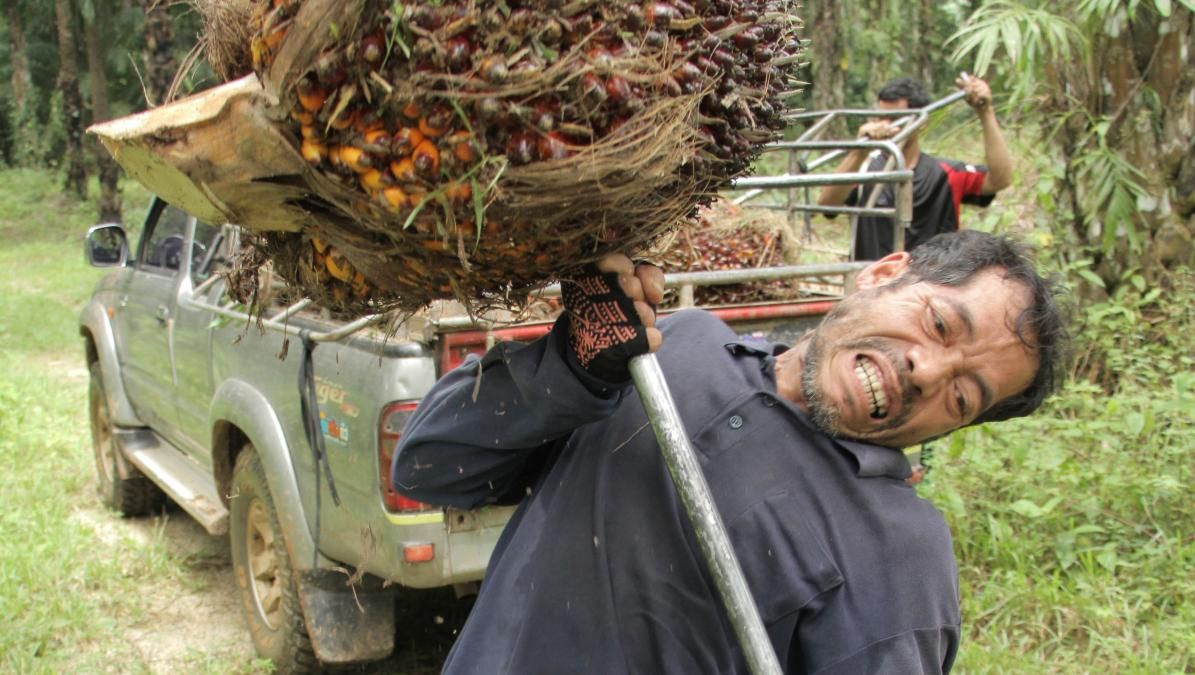 Cursed Fruits: The Palm Oil Problem