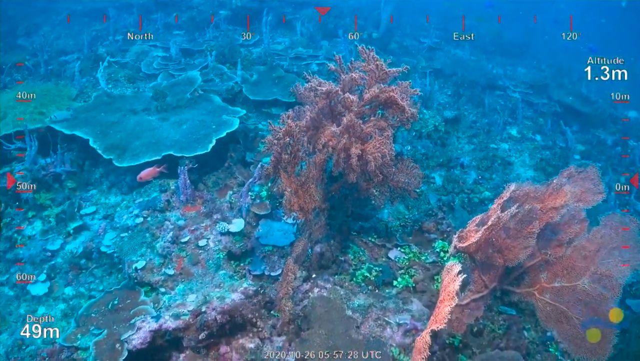 Am Great Barrier Reef: Wissenschaftler entdecken bisher unbekanntes Koralenriff