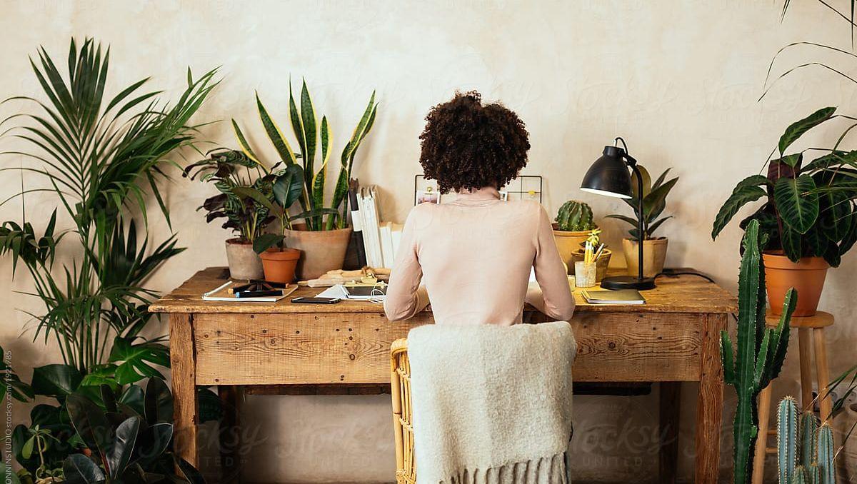 Zimmerpflanzen als Statussymbol: Meine Altbauwohnung, mein Rennrad, meine Alocasia