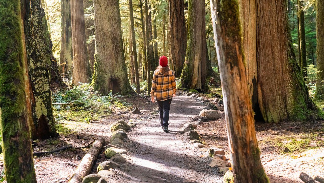 """Neurowissenschaftler über Fitness für Herz und Gehirn: """"Gehen ist einer der besten Wege, um uns in Topform zu bringen"""""""