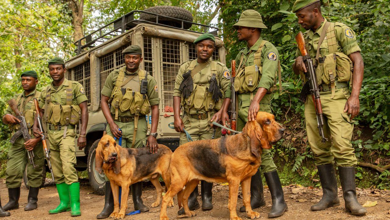 TV-Doku »Zum Schutz der Tiere«: Mit Bluthunden gegen Wilderer