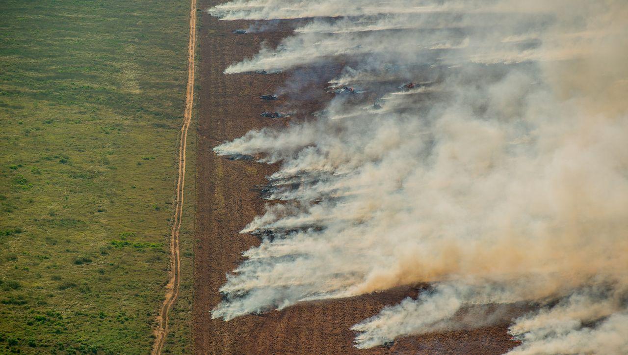 Auswertung für Juli: Amazonas-Regenwald brennt heftiger als im Katastrophenjahr 2019