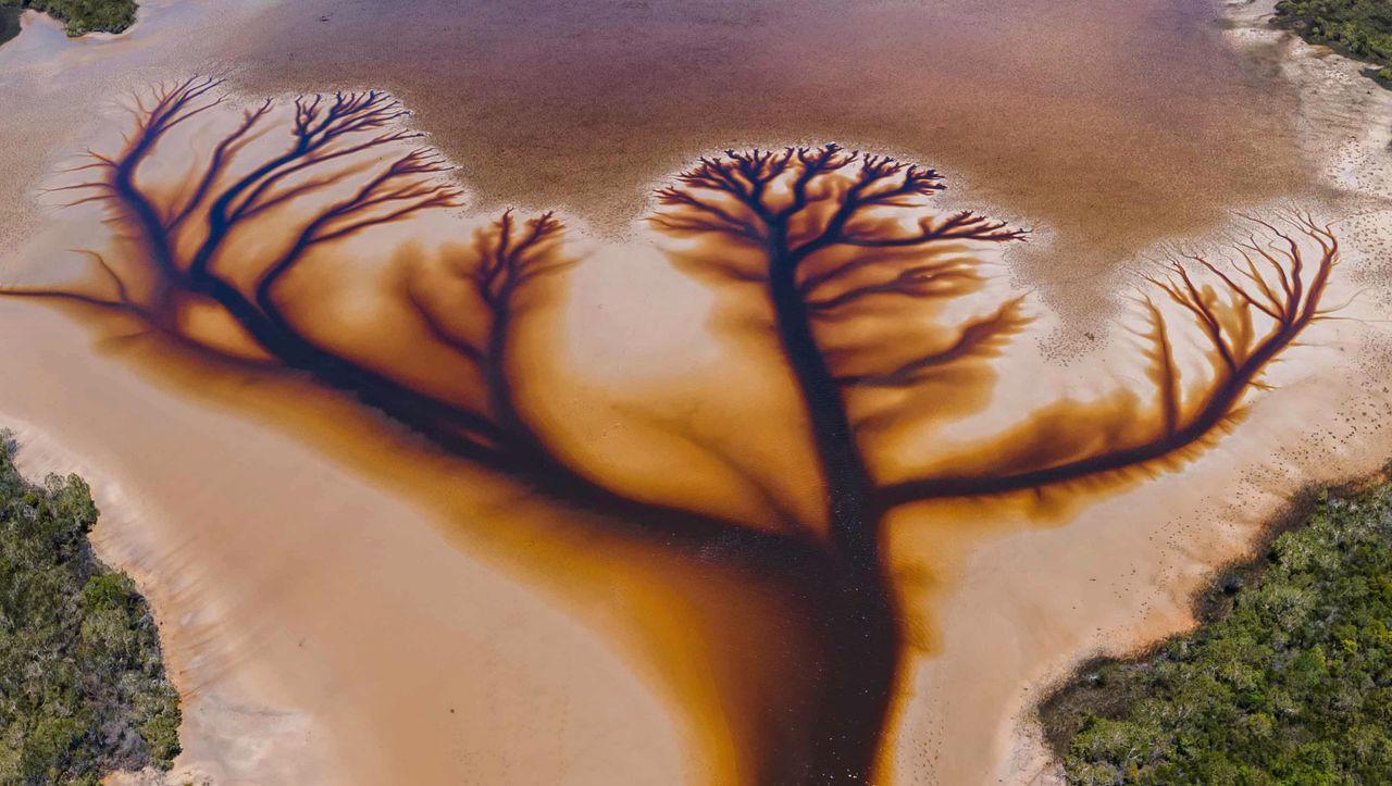 Australischer Amateurfotograf: Der »Baum des Lebens« im Lake Cakora