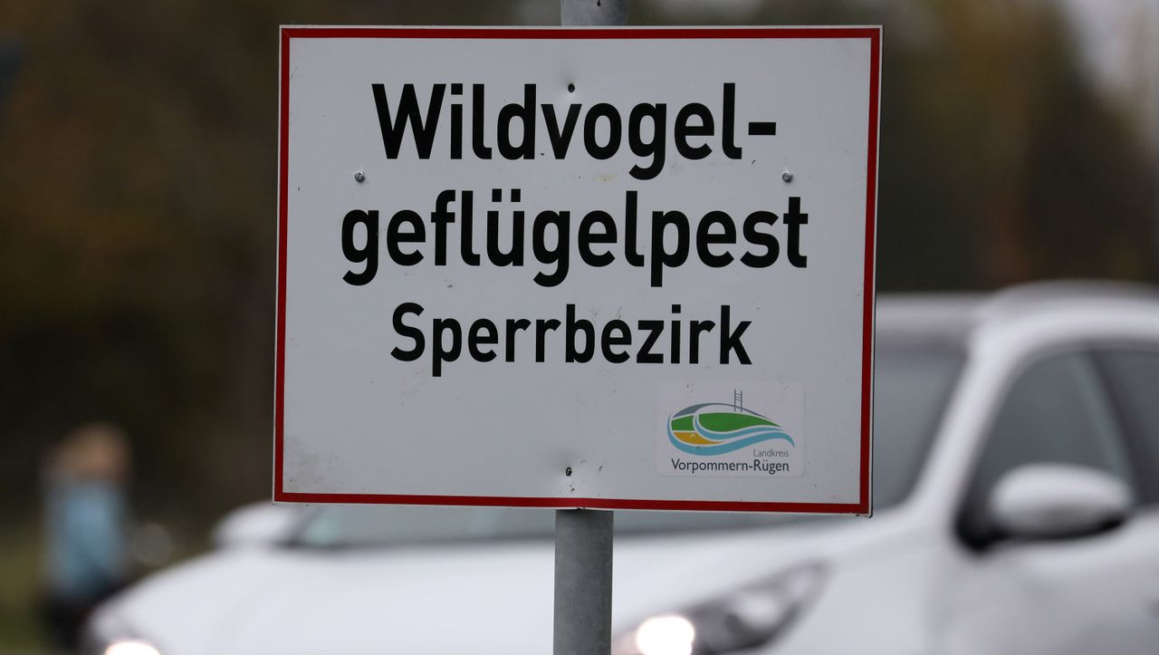 Gefährliche Tierseuche: Vogelgrippe breitet sich in Deutschland aus