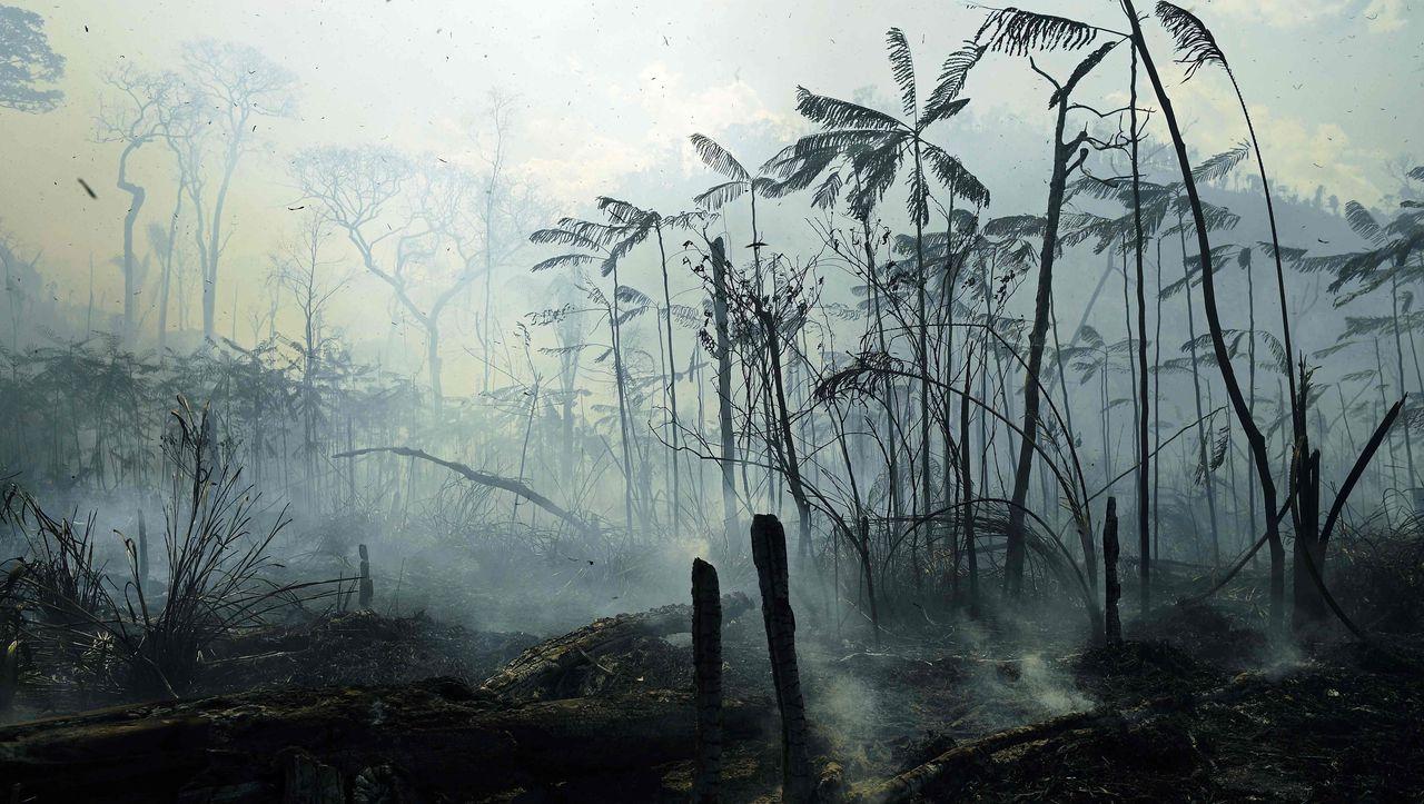 Satelliten-Daten: 43 Millionen Hektar tropischen Regenwalds zerstört