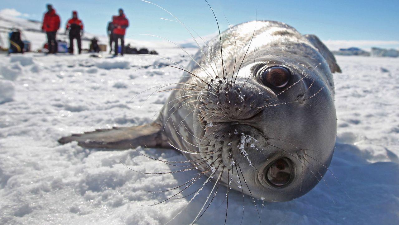 Deutscher Vorstoß: Antarktis-Kommission streitet über weltgrößte Schutzzone